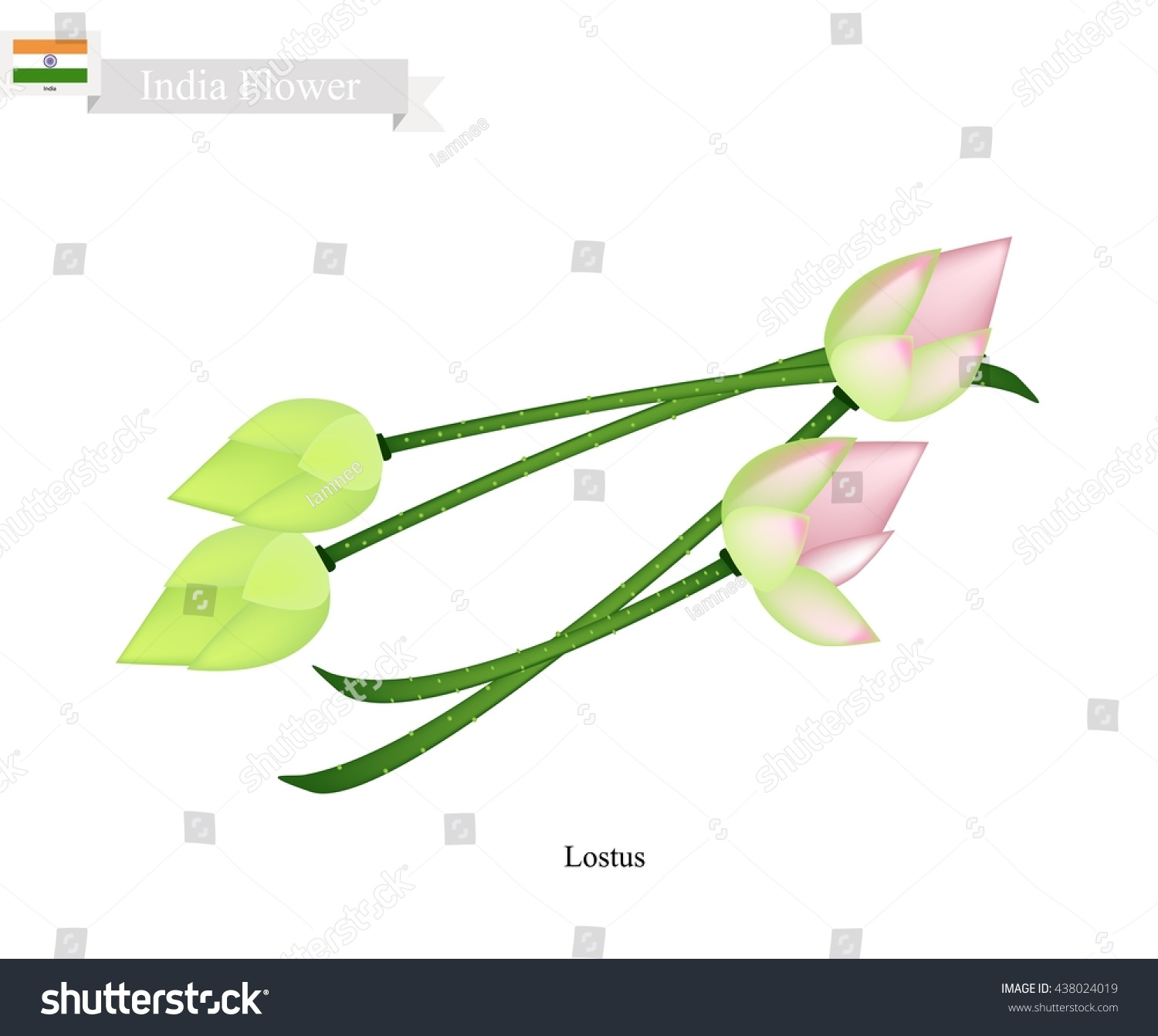 India Flower Illustration Water Lily Lotus Stock Vector Royalty
