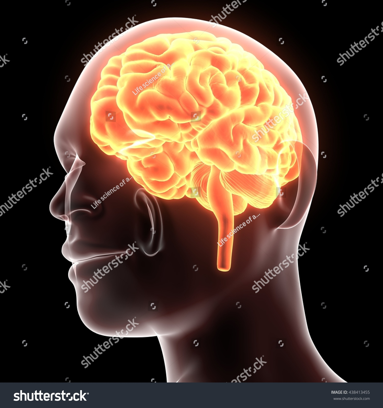 3 D Illustration Human Brain Anatomy Stock Illustration - Royalty ...