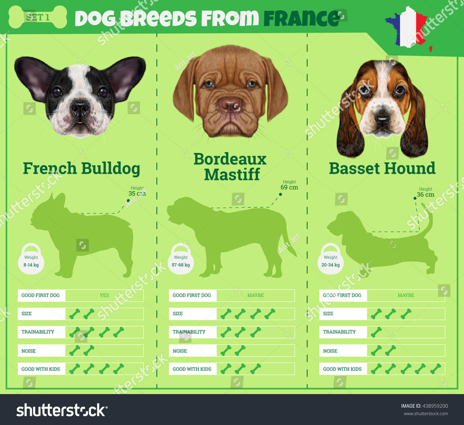 Dogs breed vector info graphics types stock vector for What type of dog is this