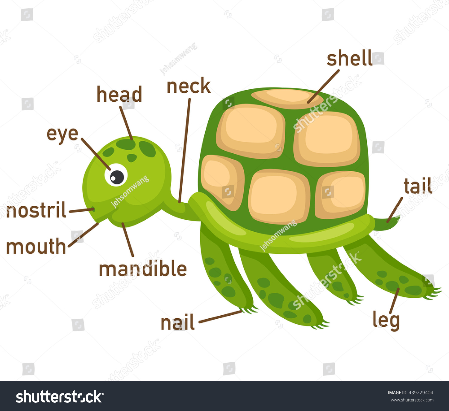 Illustration Turtle Vocabulary Part Body Stock Vector Royalty Free