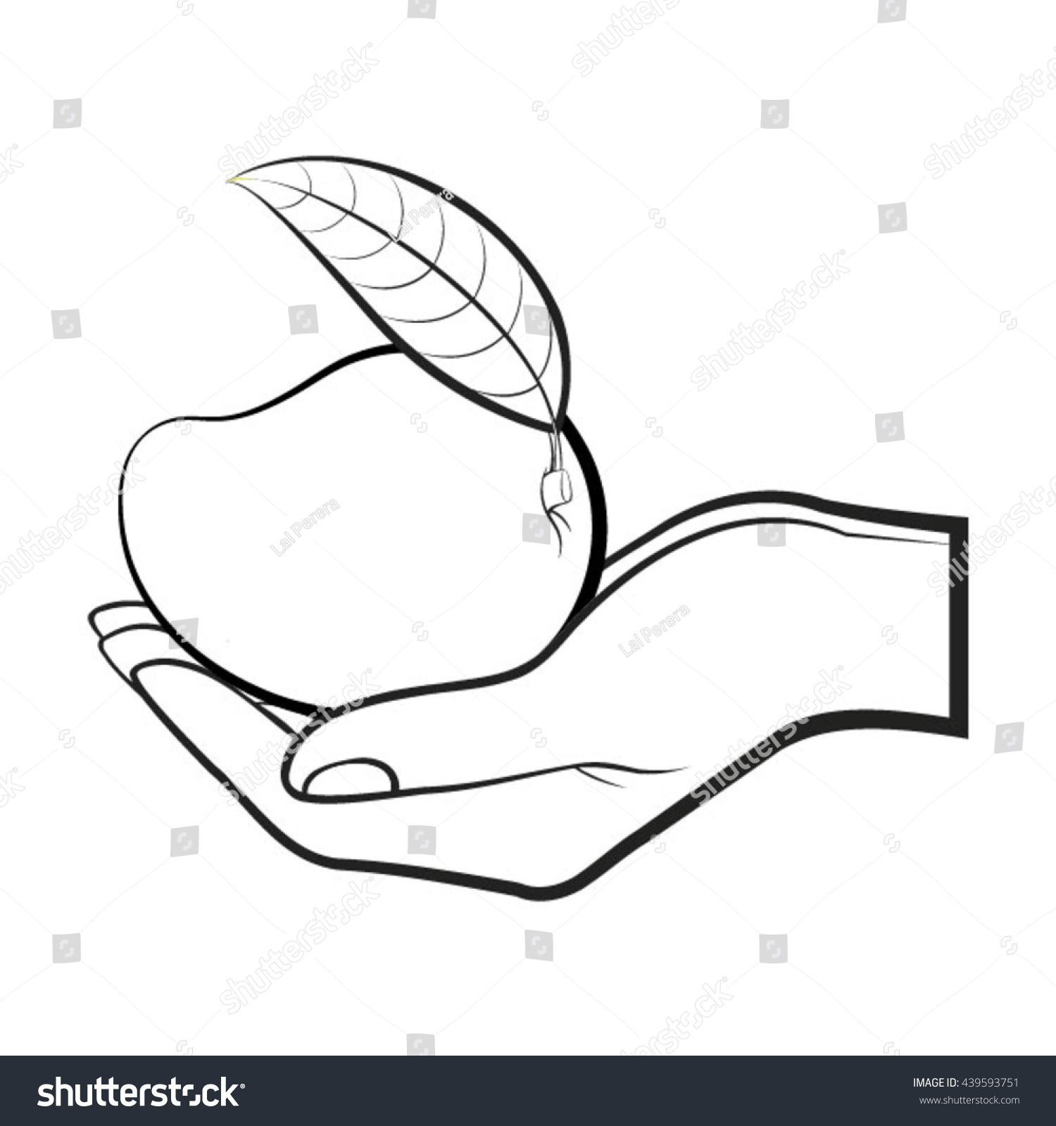 hand holding mango in outline vector drawing