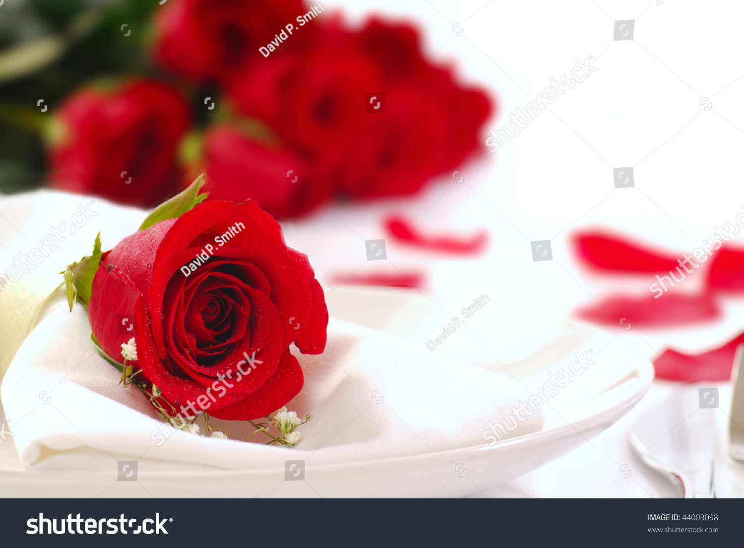 Single red rose on a dinner plate with roses and rose for Individual rose petals