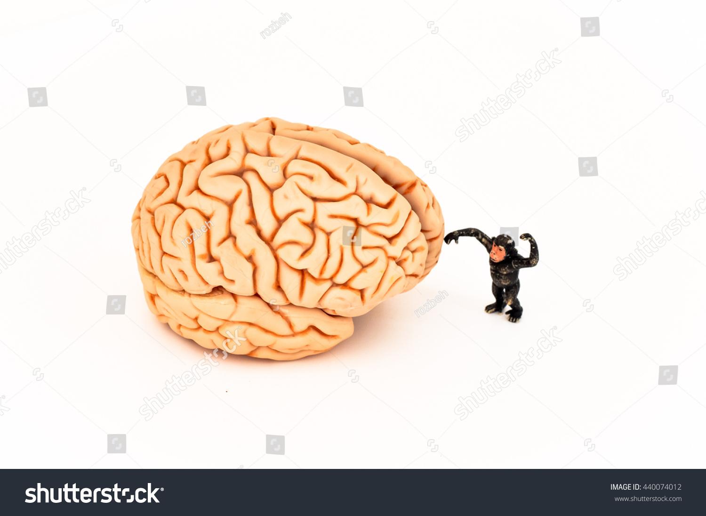 Brain Plastic Monkey Isolated On White Stock Photo 440074012 ...