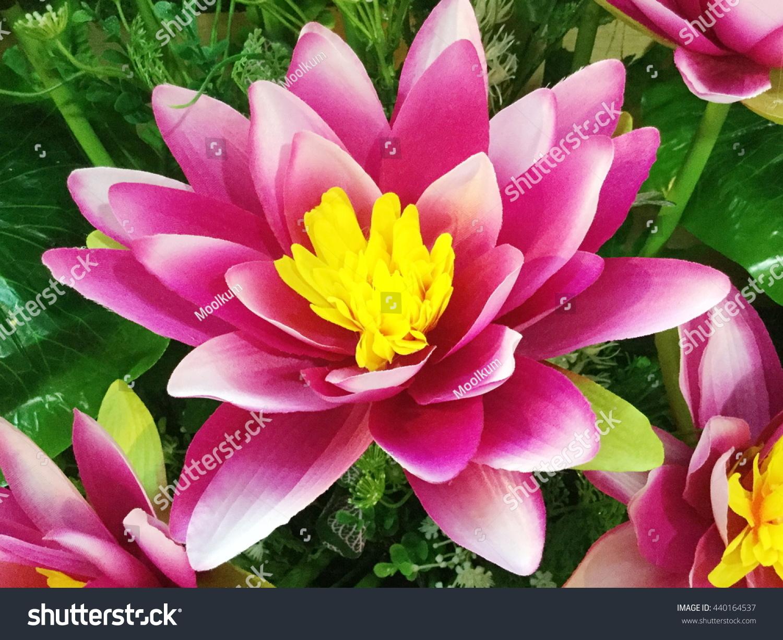 Fake Lotus Flower Background Stock Photo Edit Now 440164537