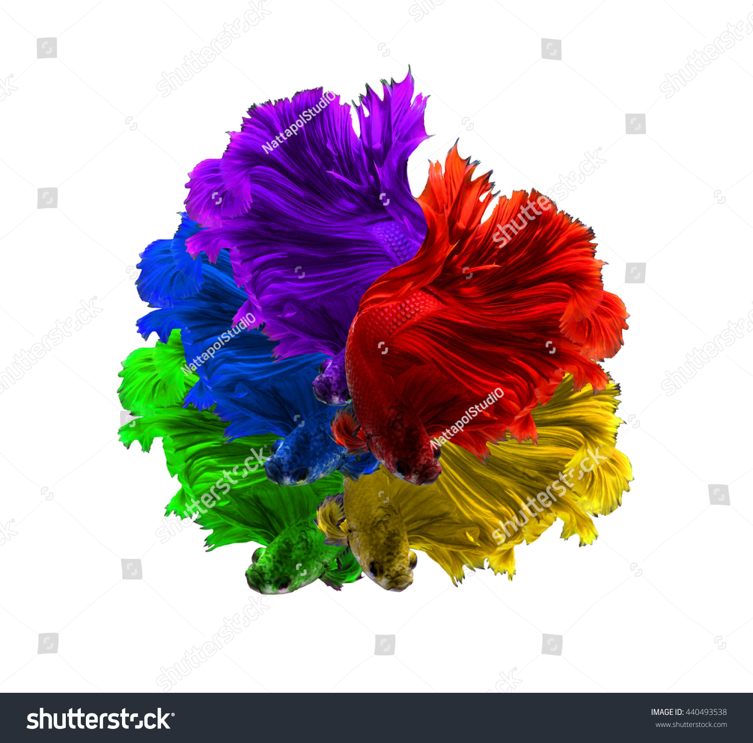 Red Purple Green Yellow Blue Color Stock Photo (Royalty Free ...