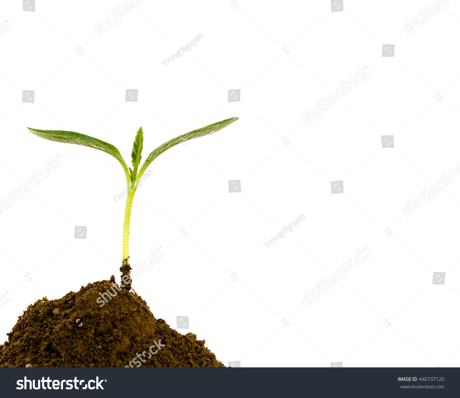 image of fresh green plant in dirt isolated over white