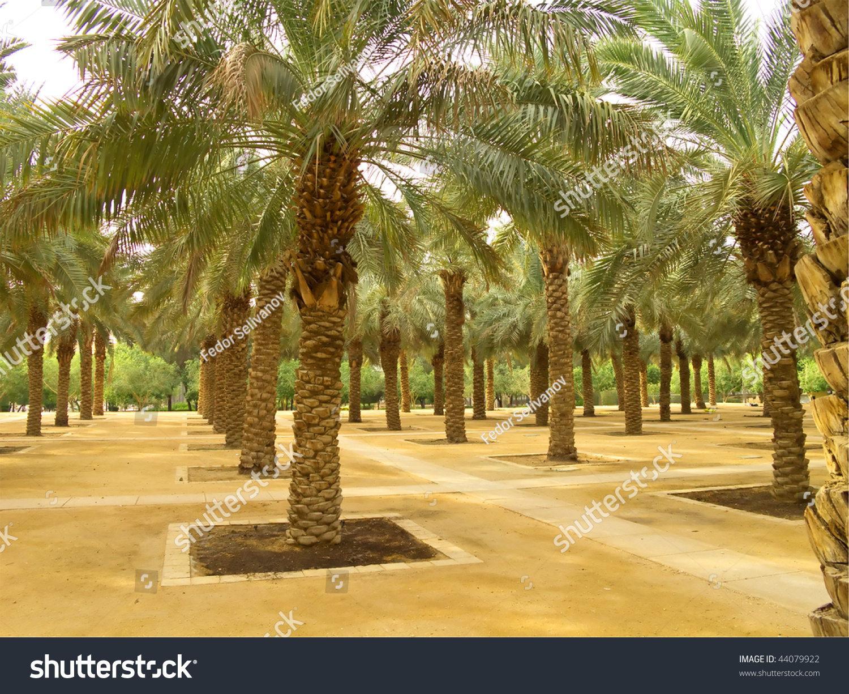 Palm Garden Riyadh City Saudi Arabia Stock Photo (Edit Now) 44079922 ...