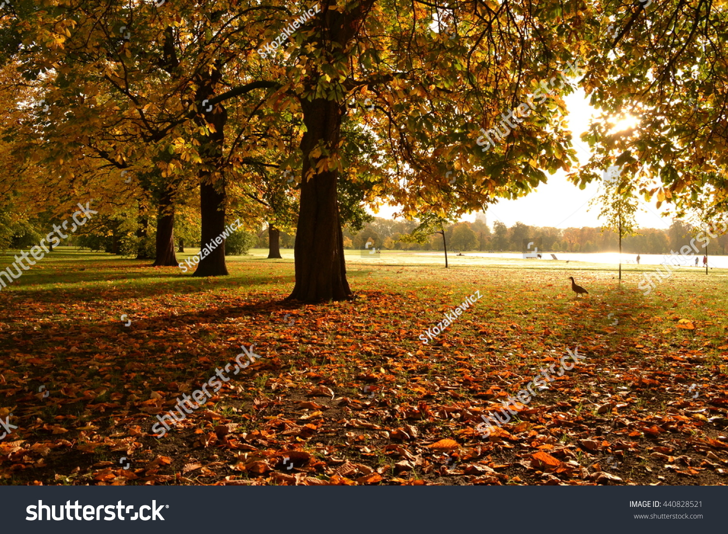 Golden Autumn London Park Morning Sun Stock Photo (Edit Now ...