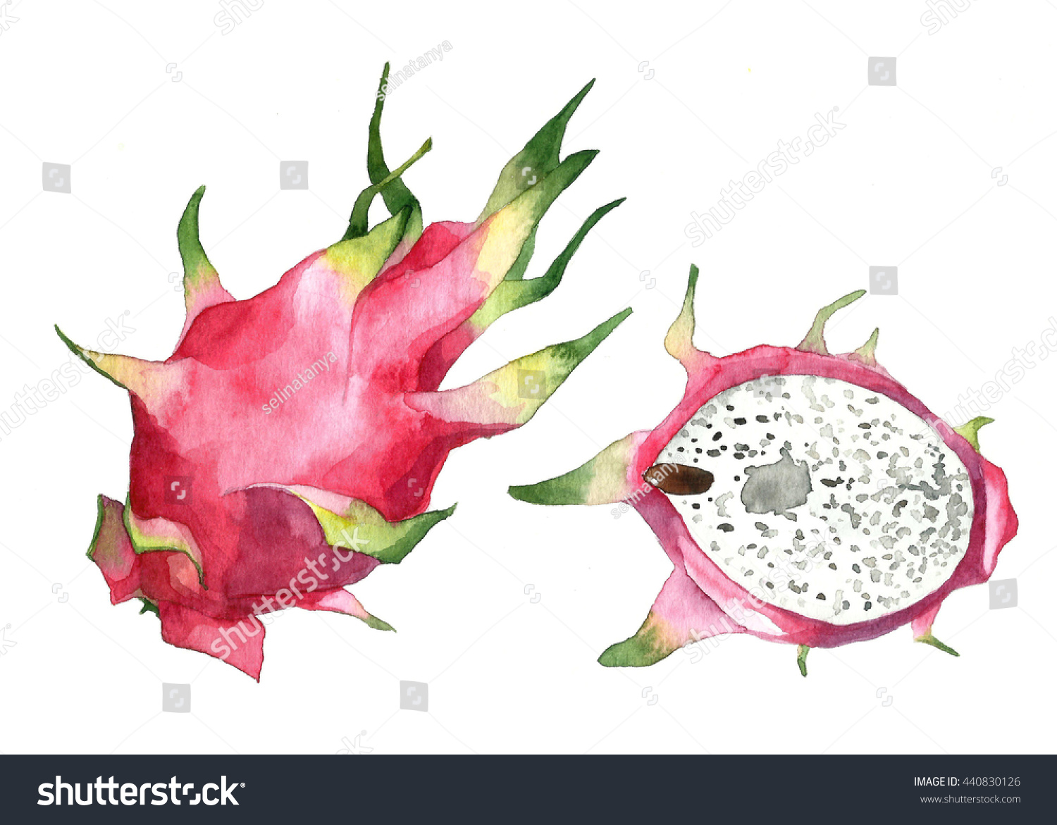 Hand Draw Watercolor Dragon Fruit Pitaya On White Background