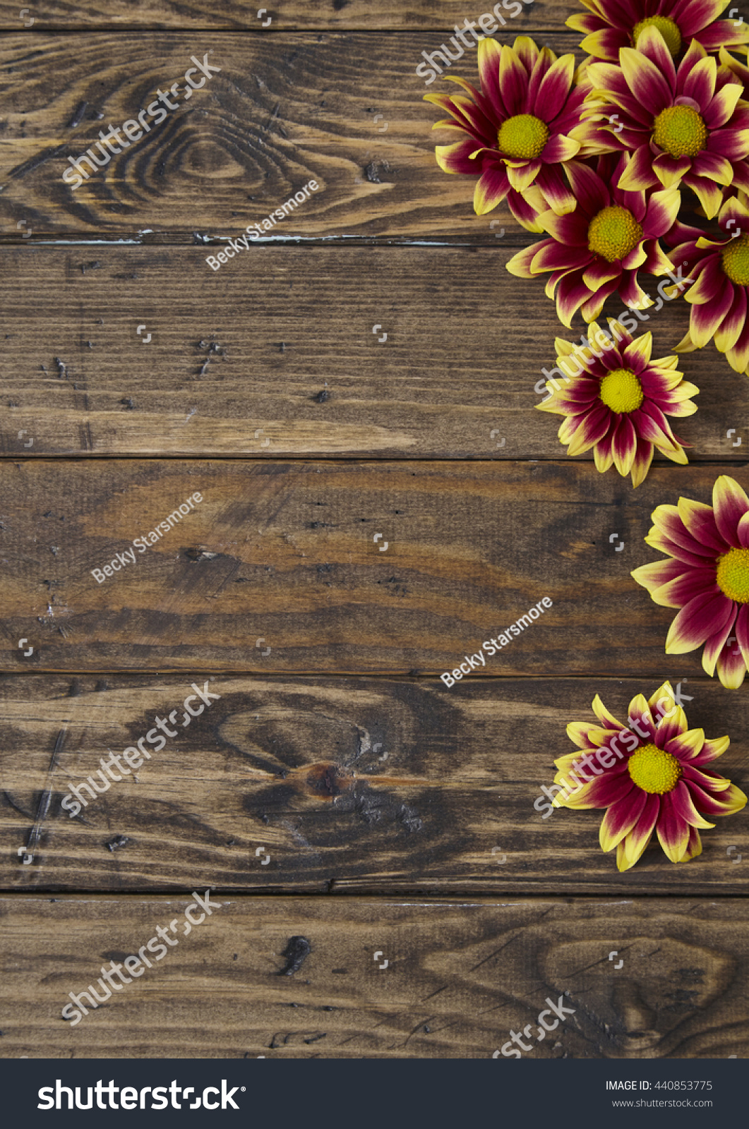Royalty Free Floral Border