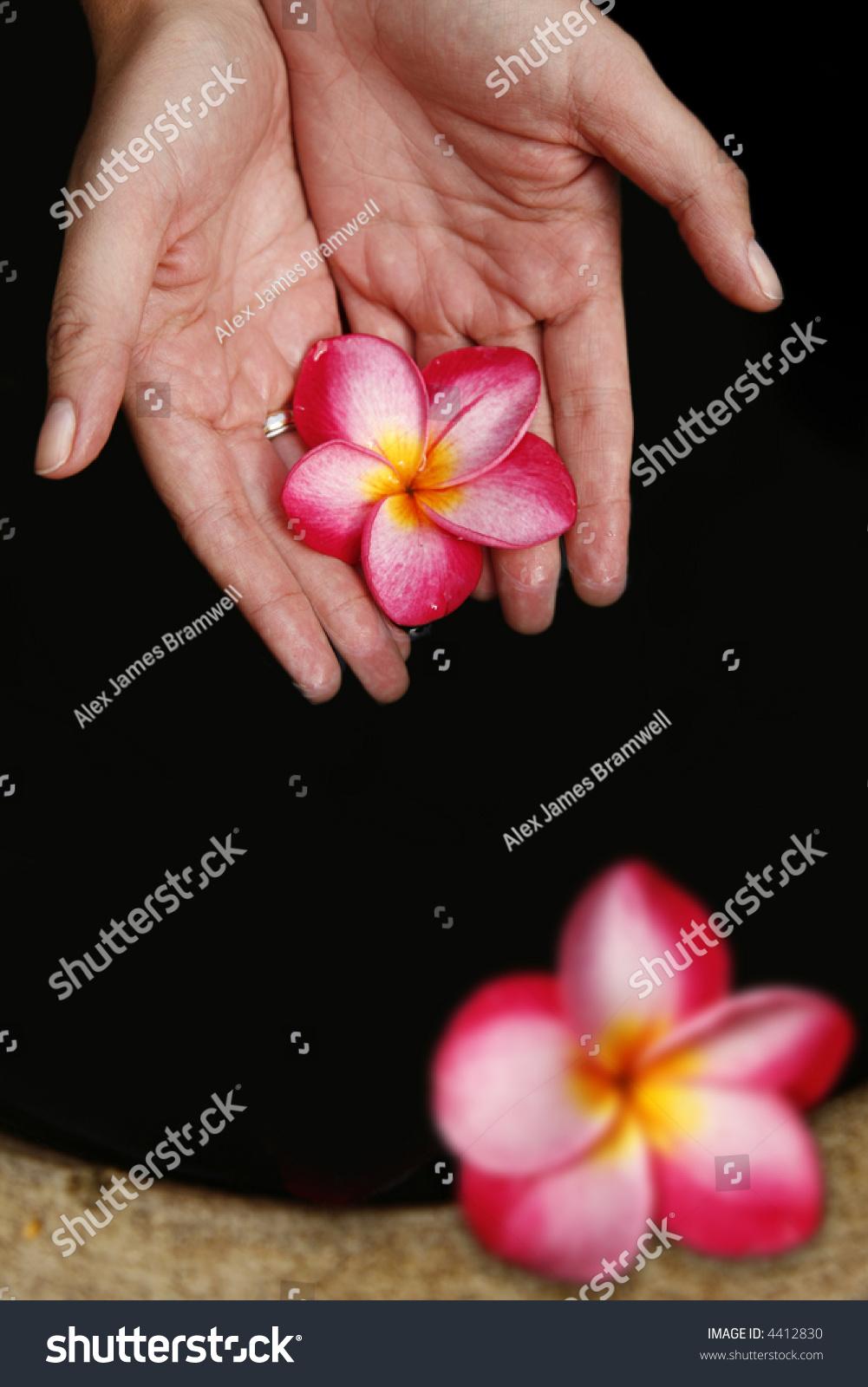 pink magnolia flower deep - photo #12