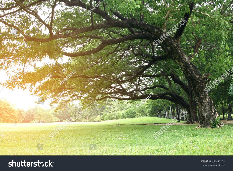 how to kill grass under trees