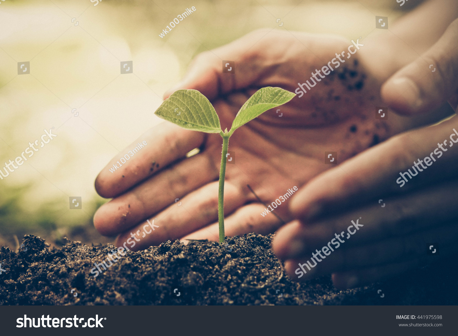 Hands farmer growing nurturing tree growing for Soil and green