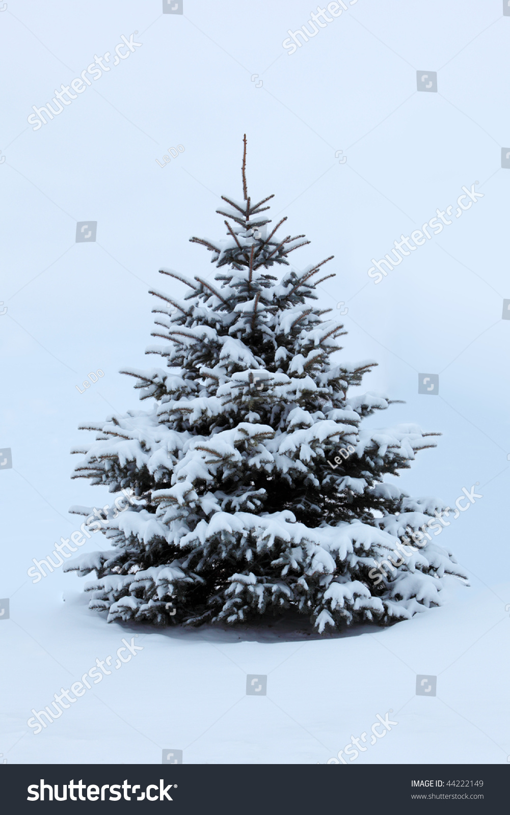 Single pine tree covered with snow in the winter stock - Images of pine trees in snow ...