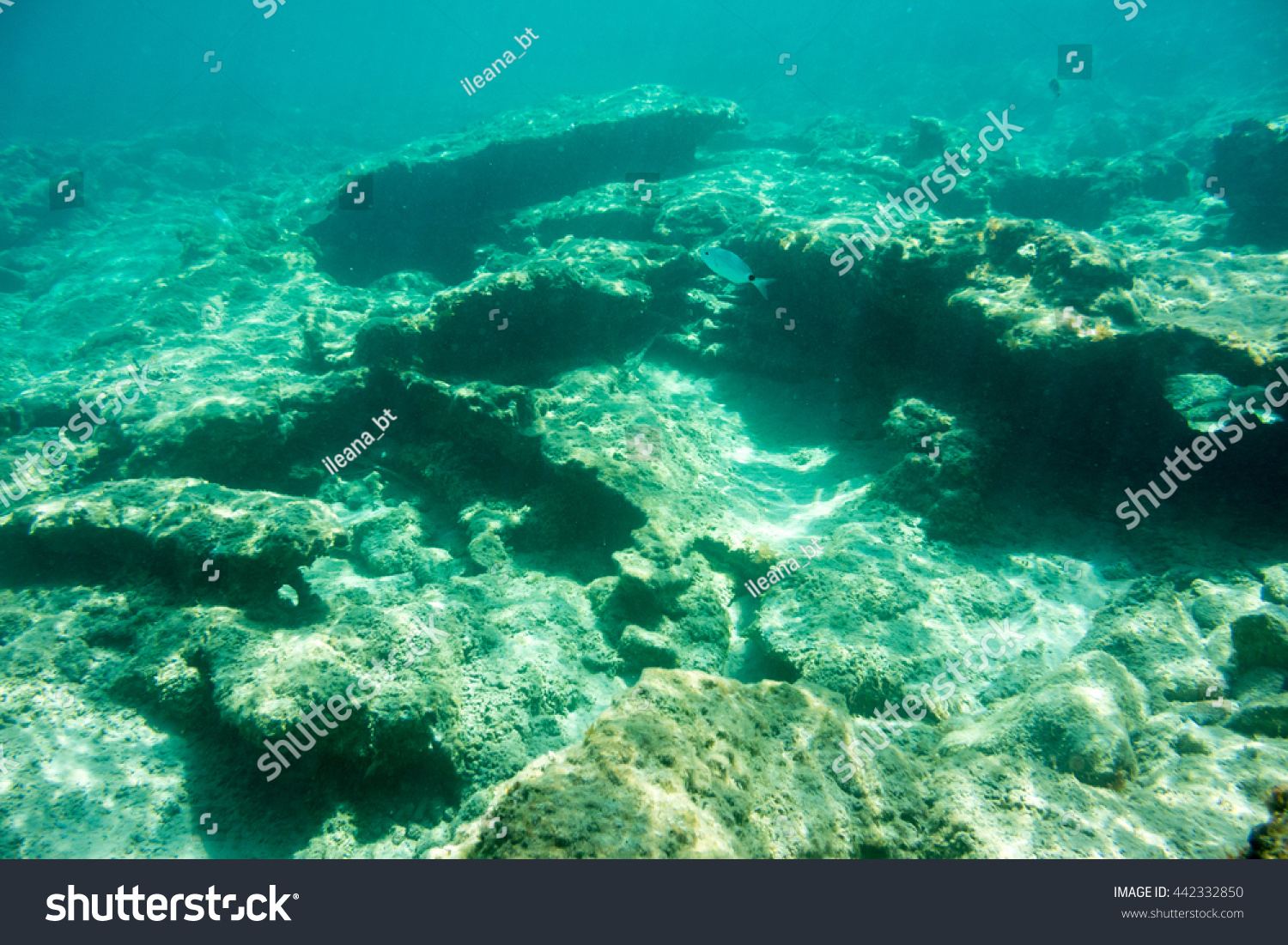 Underwater Texture And Fauna In Ionian Sea Zakynthos Greece Stock