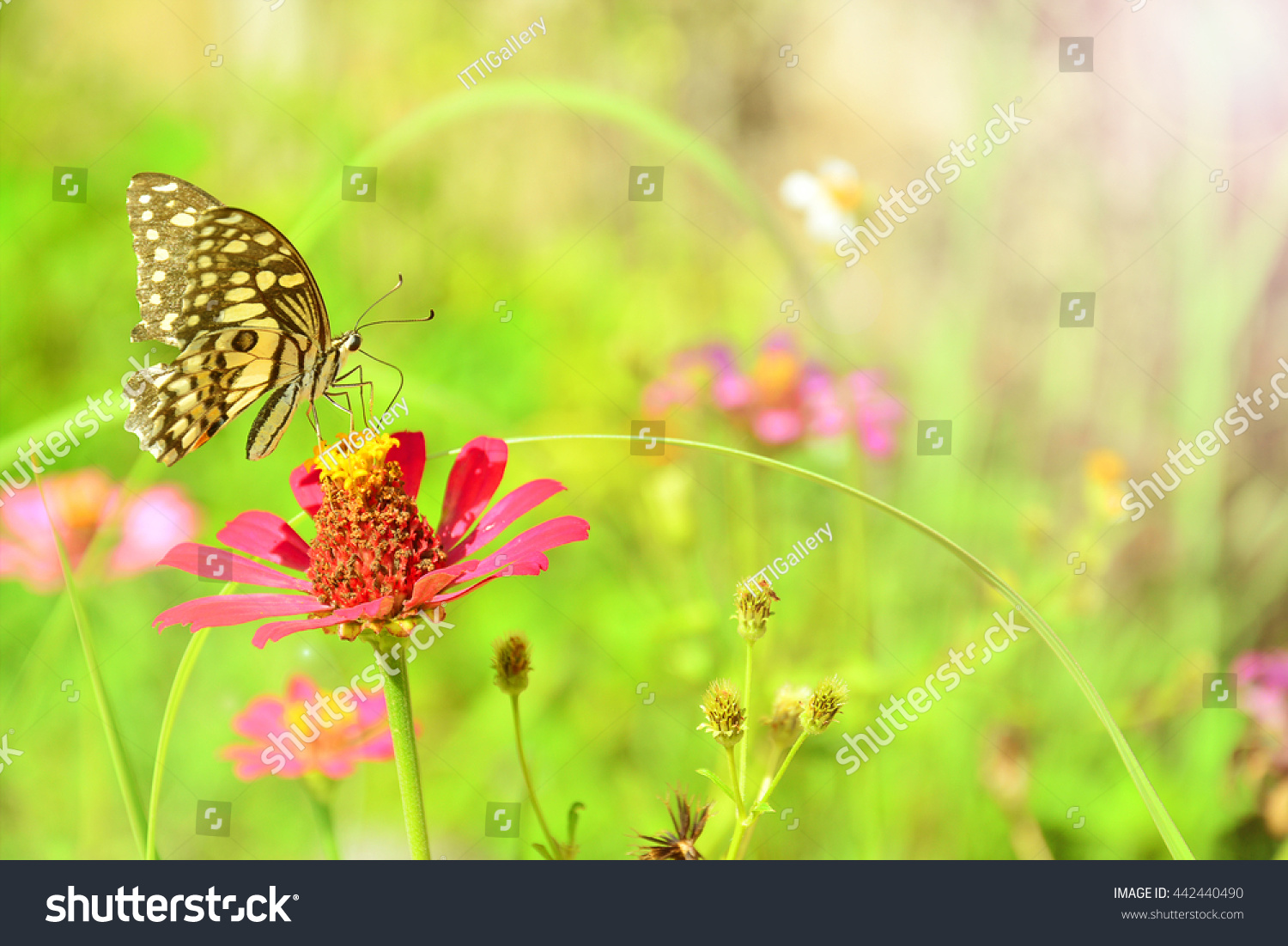 image of flowers and butterfly in the garden closeup | FinerWorks
