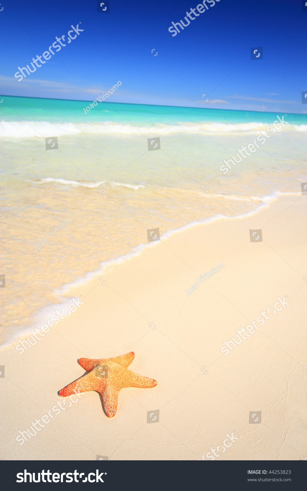 Starfish on white sand tropical beach vacation travel for White sand beach vacations