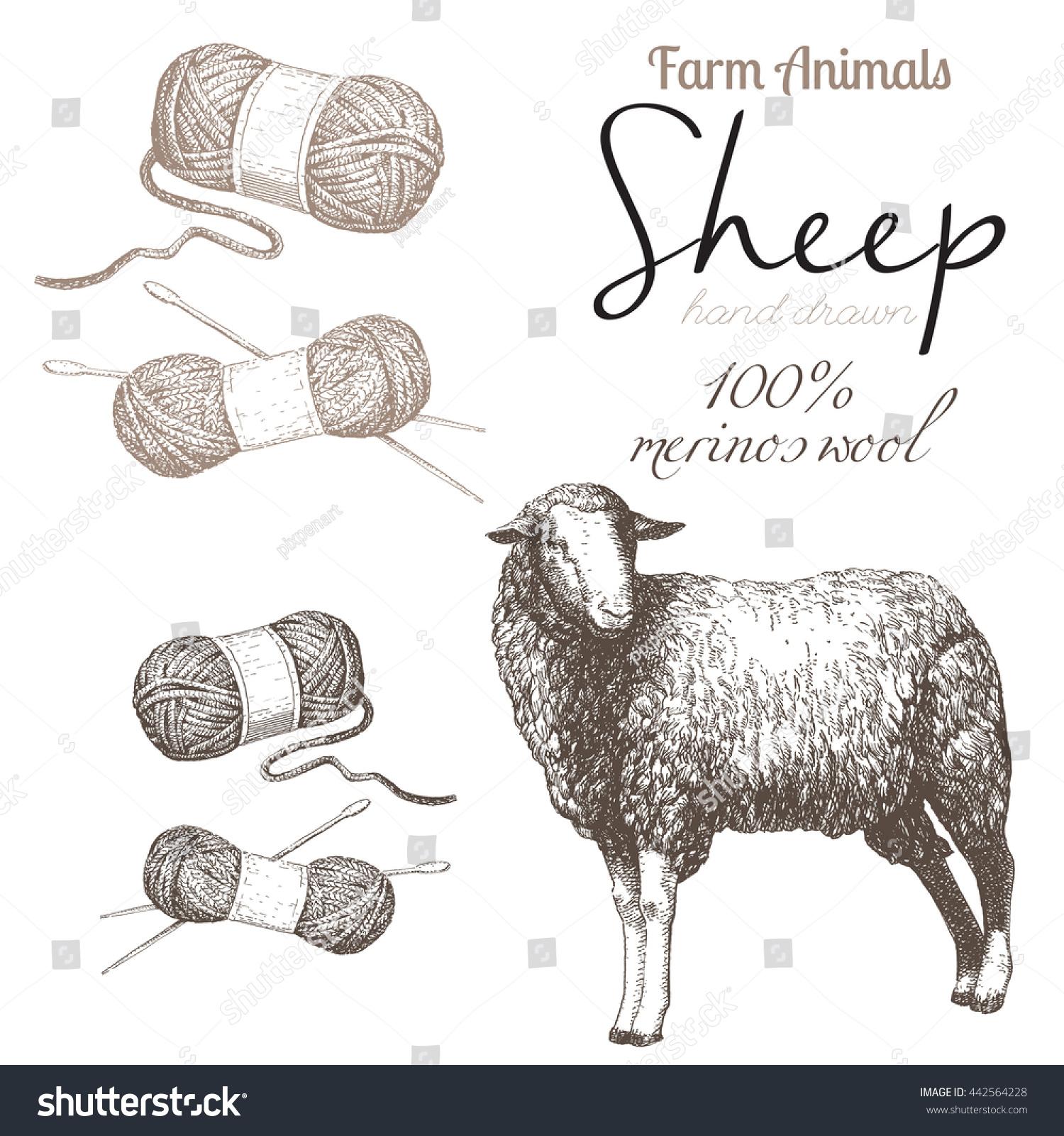 Sheep 1 Sheep Breeding Set Vector Stock Vector Royalty Free 442564228
