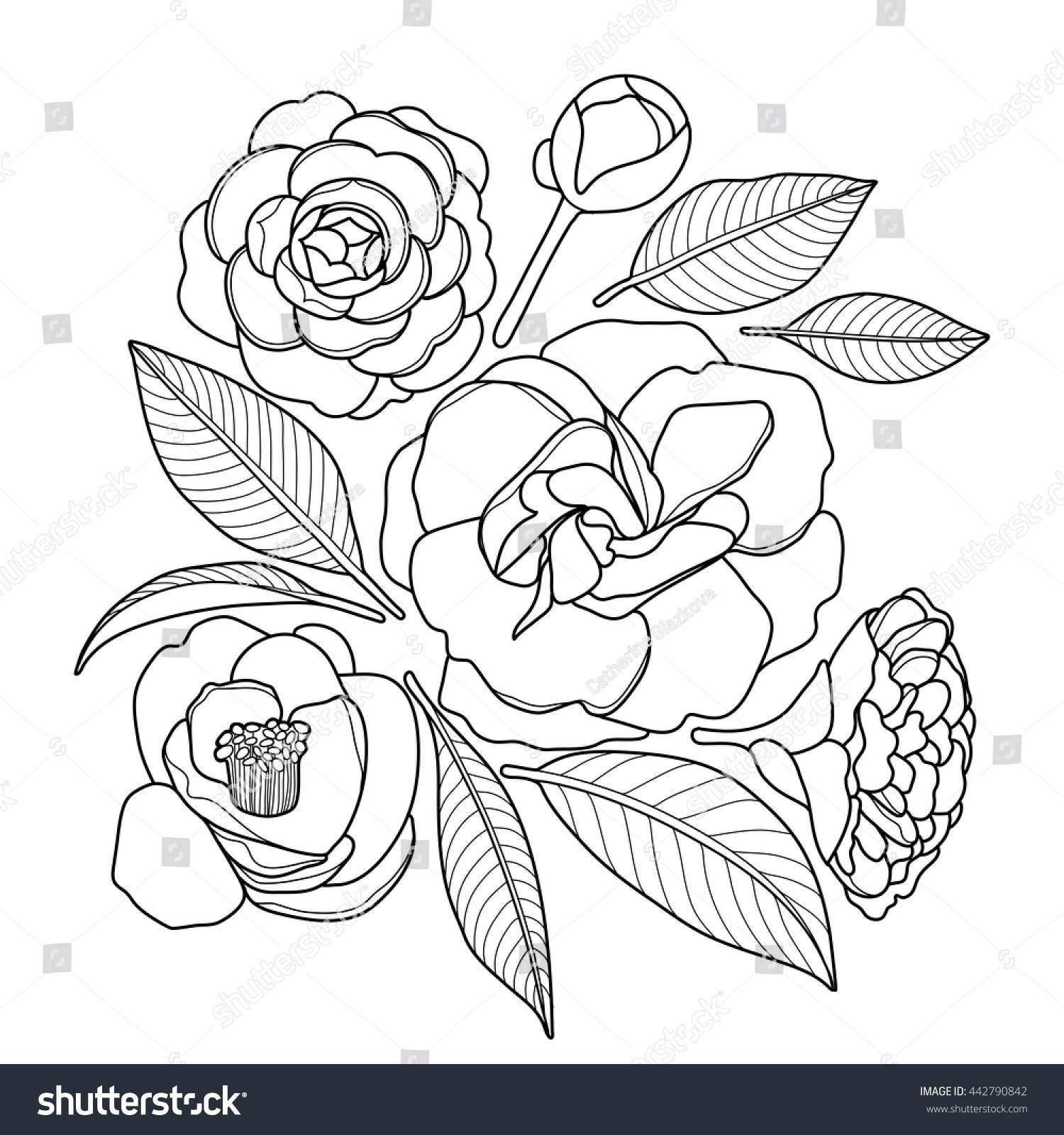 Graphic Camellia Set Isolated On White Background Vector Floral Decoration Coloring Book Page Design For