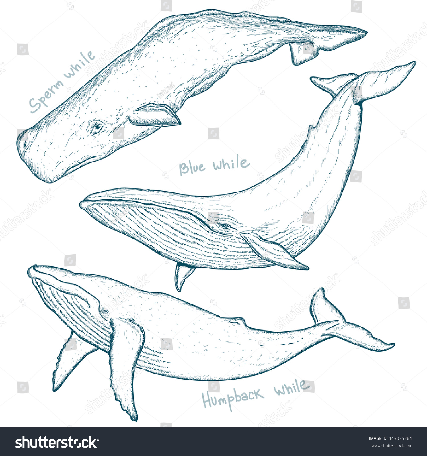 sperm-whale-sketch-drawing-gallery-erotic-amateur-movies