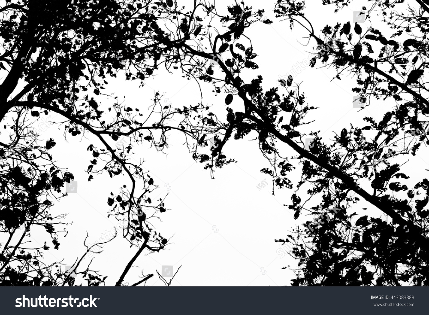 tree branch leaves silhouette against white stock photo