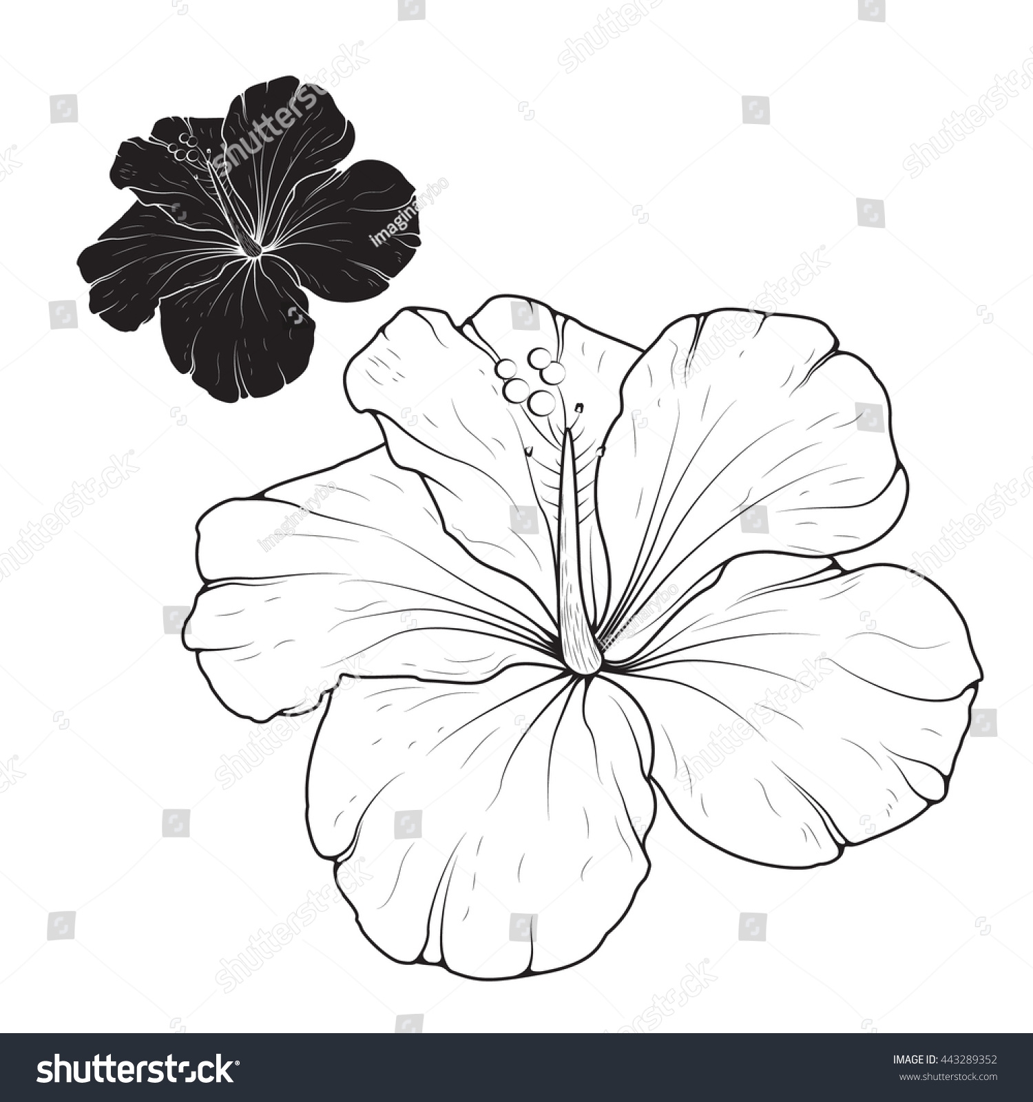 Hibiscus Mallow Flower Isolated Top View Stock Vector Royalty Free