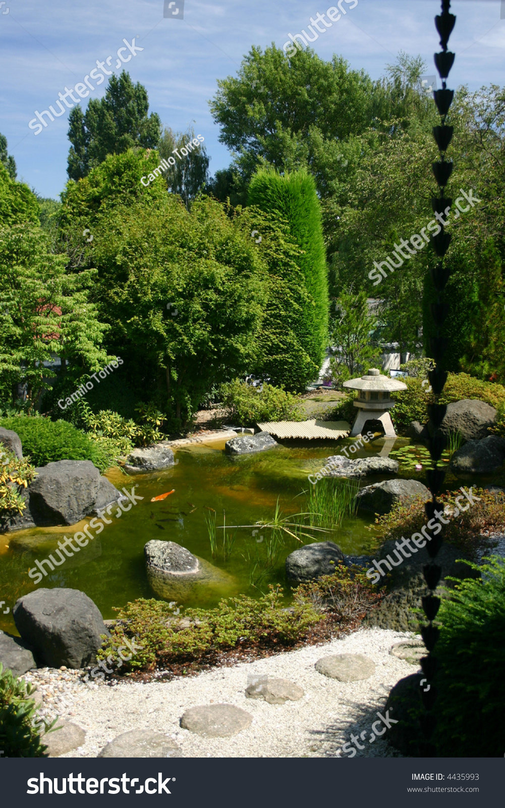 Beautiful traditional japanese garden koi carps stock for Your pond japan
