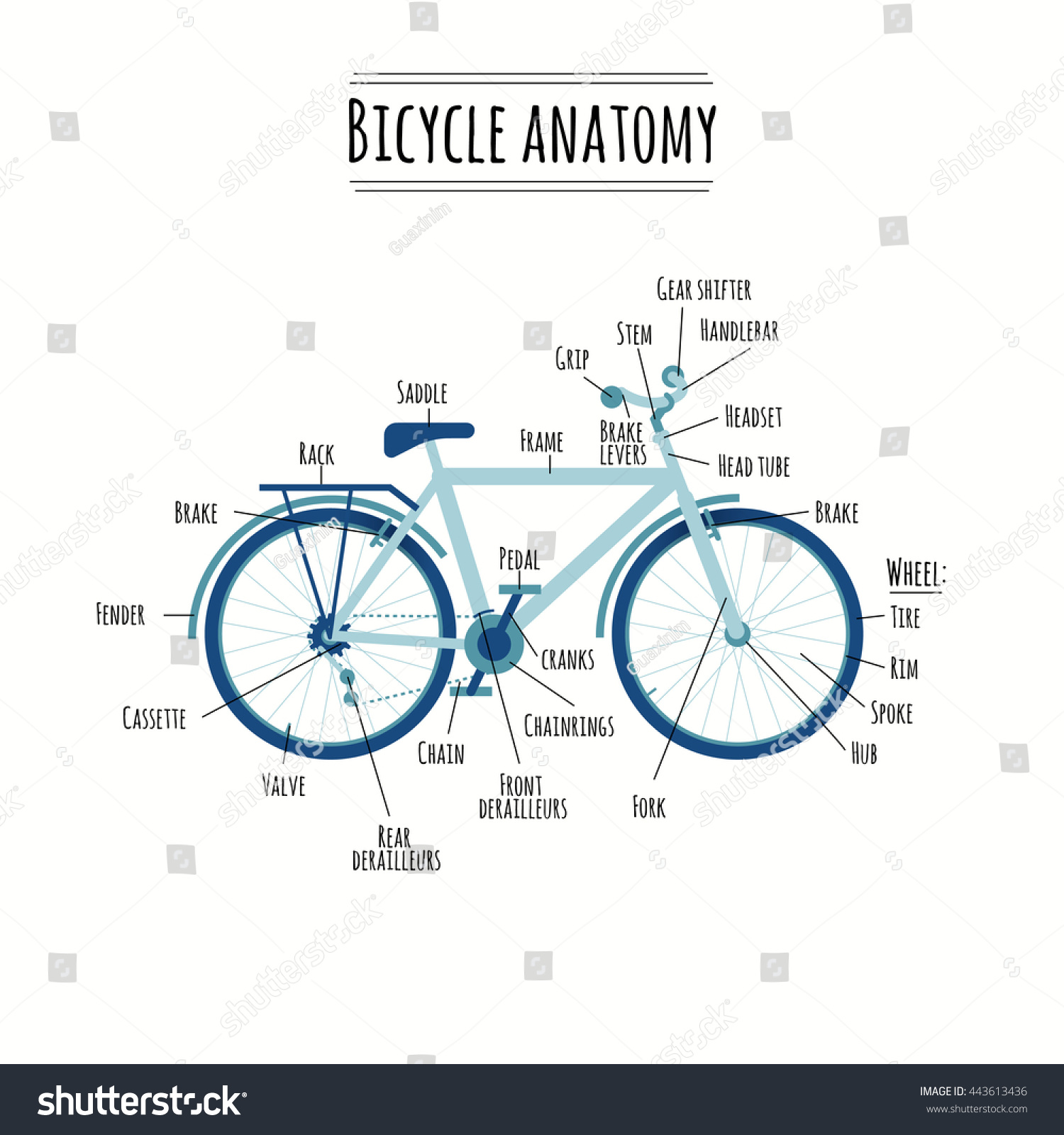 Bicycle Anatomy Bike Components Bike Parts Stock Vector 443613436 ...