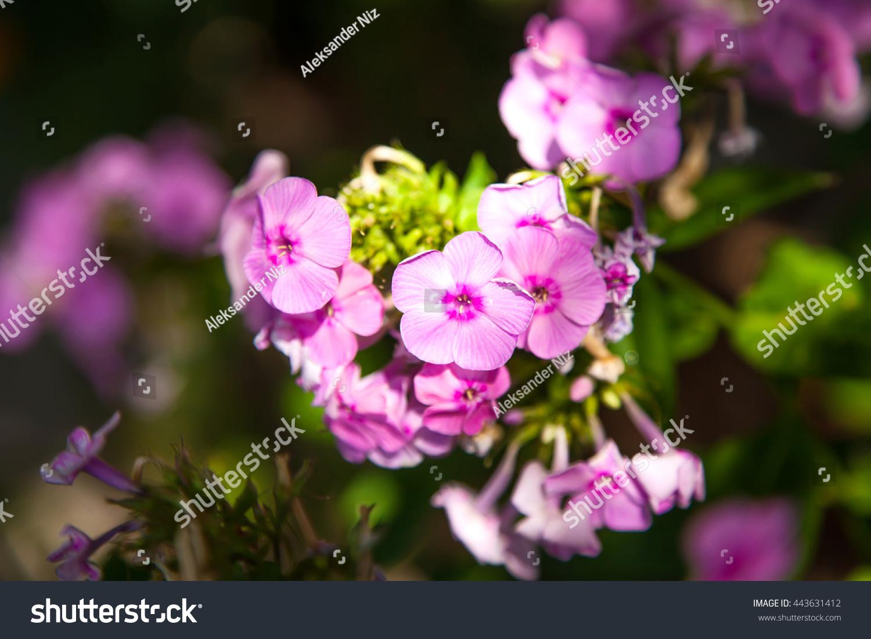 Beautiful flower ez canvas izmirmasajfo