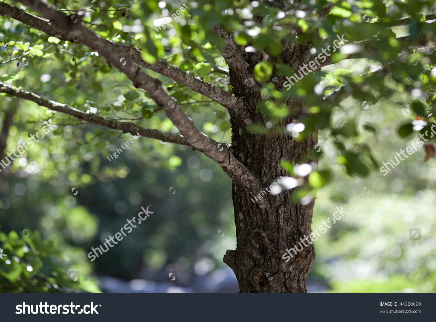 Nature Woodland Background - Alder Tree On A Lovely Summer ...