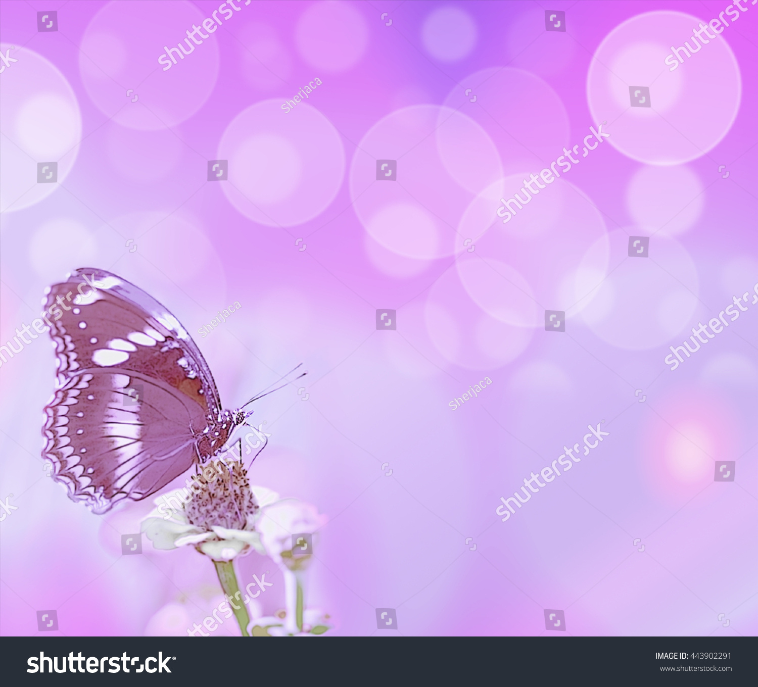 Abstract Purple Bubbles Butterfly Card Background Stock Illustration