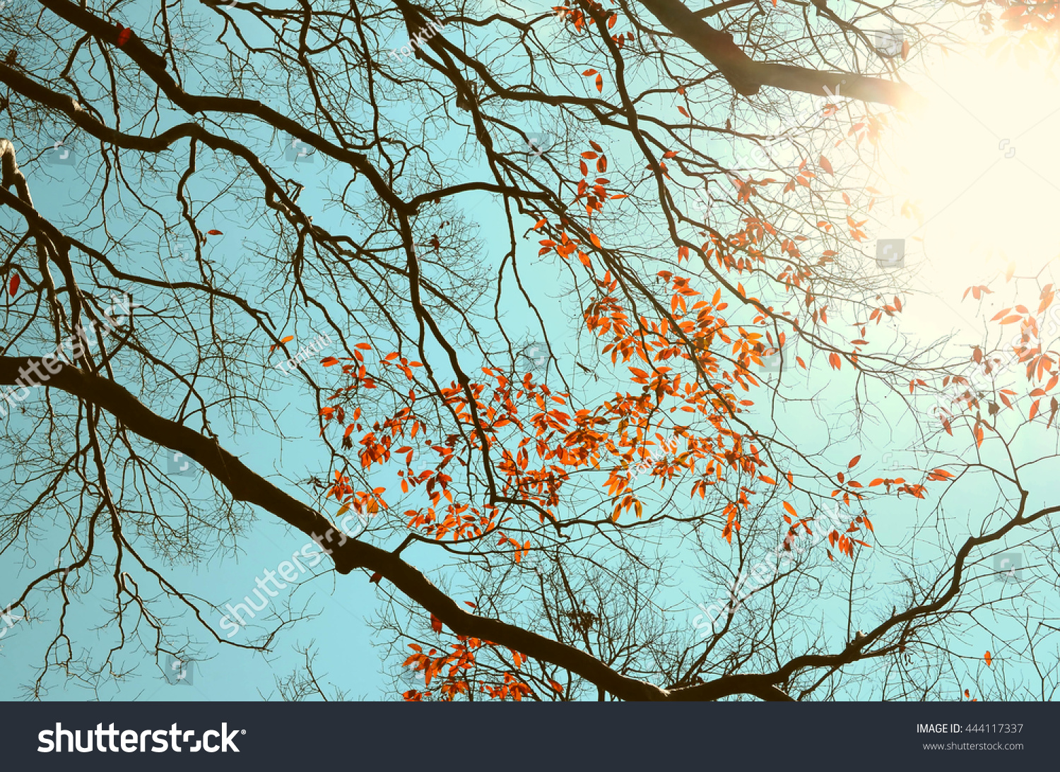 Autumn Tree Branch Backgroundretro Color Style Stock Photo 444117337 ...