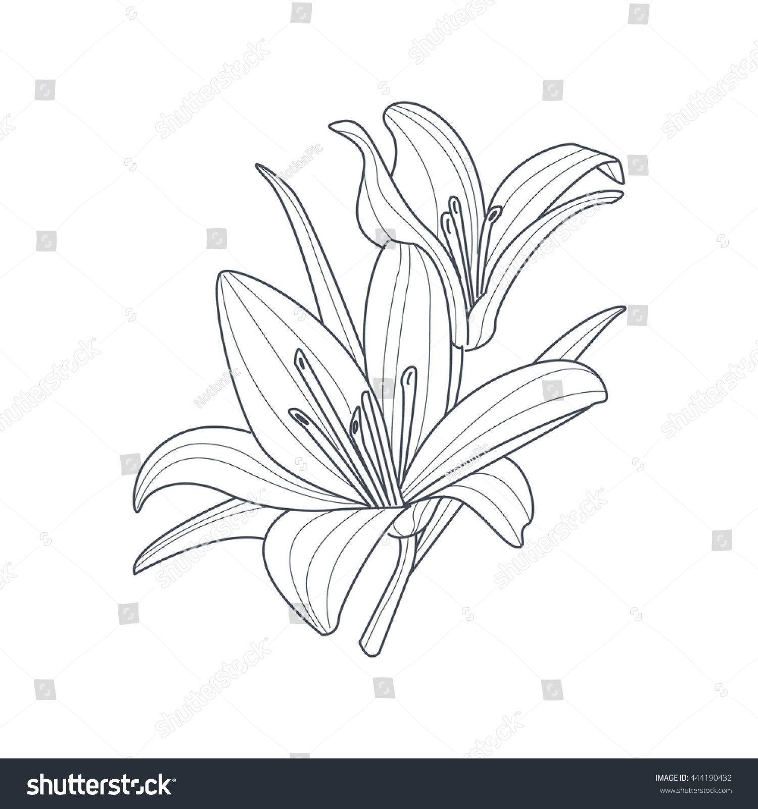 Similar Images Stock Photos Vectors Of Two Lilies Flower