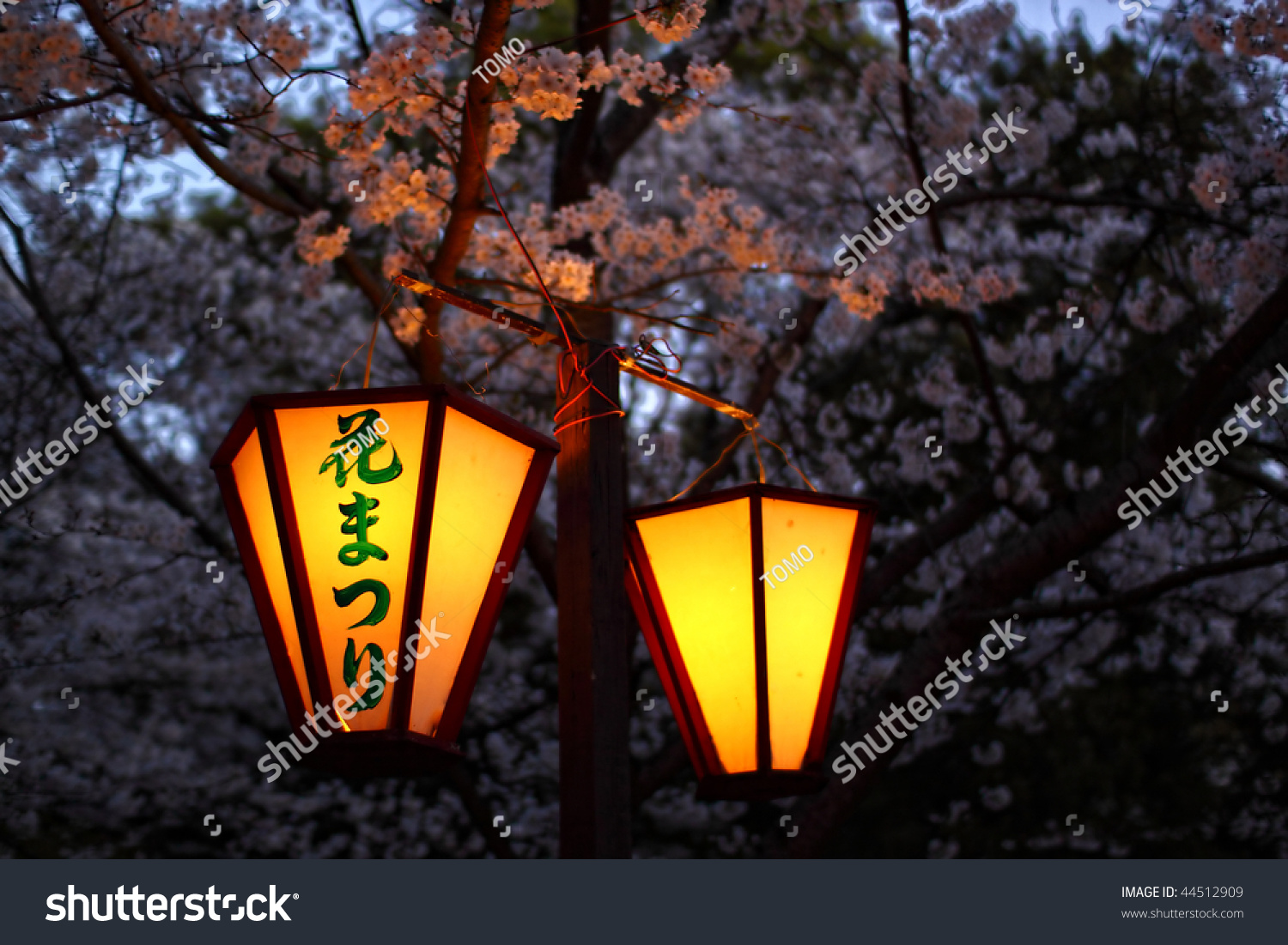 Japanese Paper Lantern In Cherry Blossom Park At Night