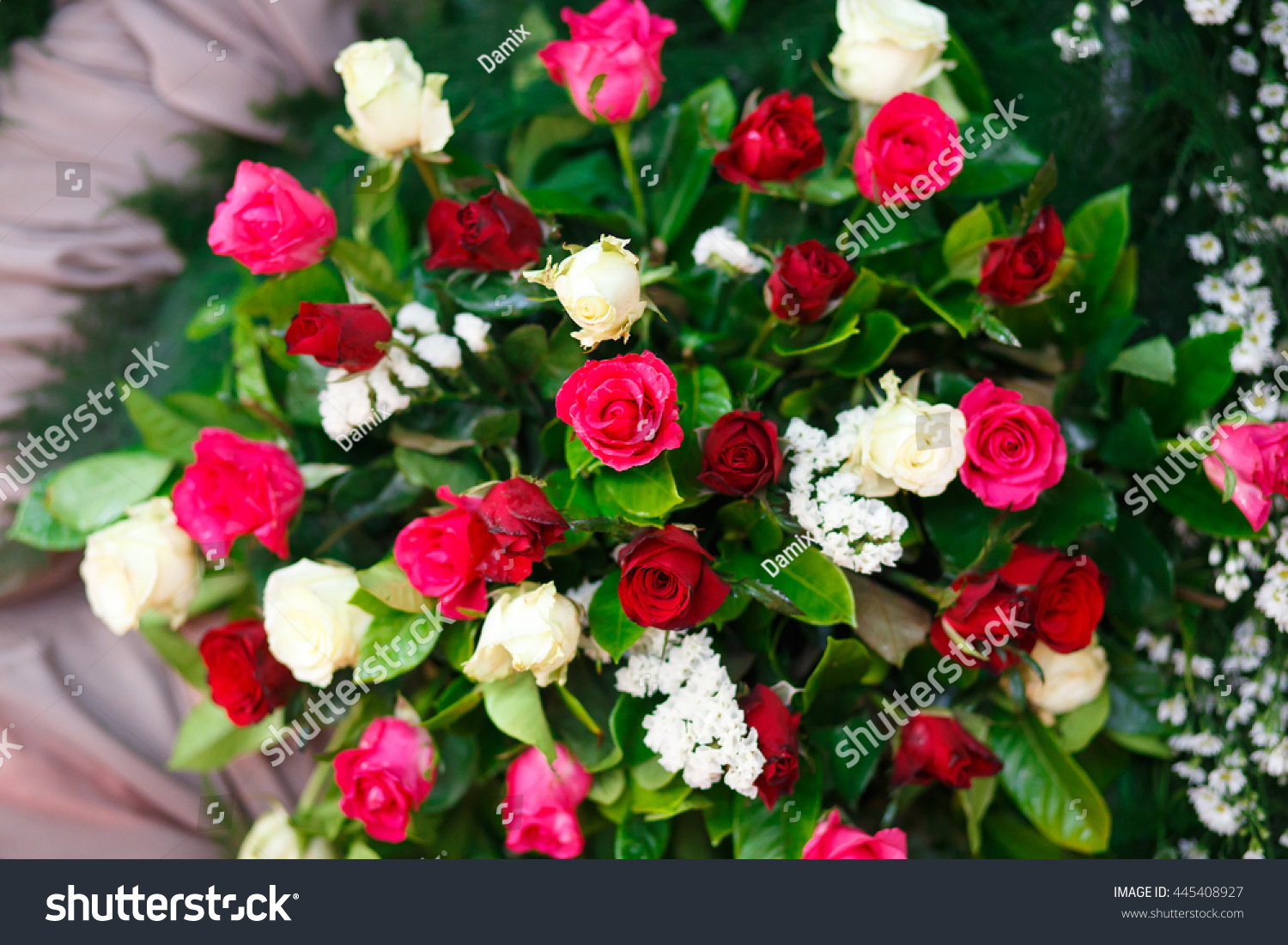Mix Tree Colour Rose Pink Red Stock Photo (Royalty Free) 445408927 ...