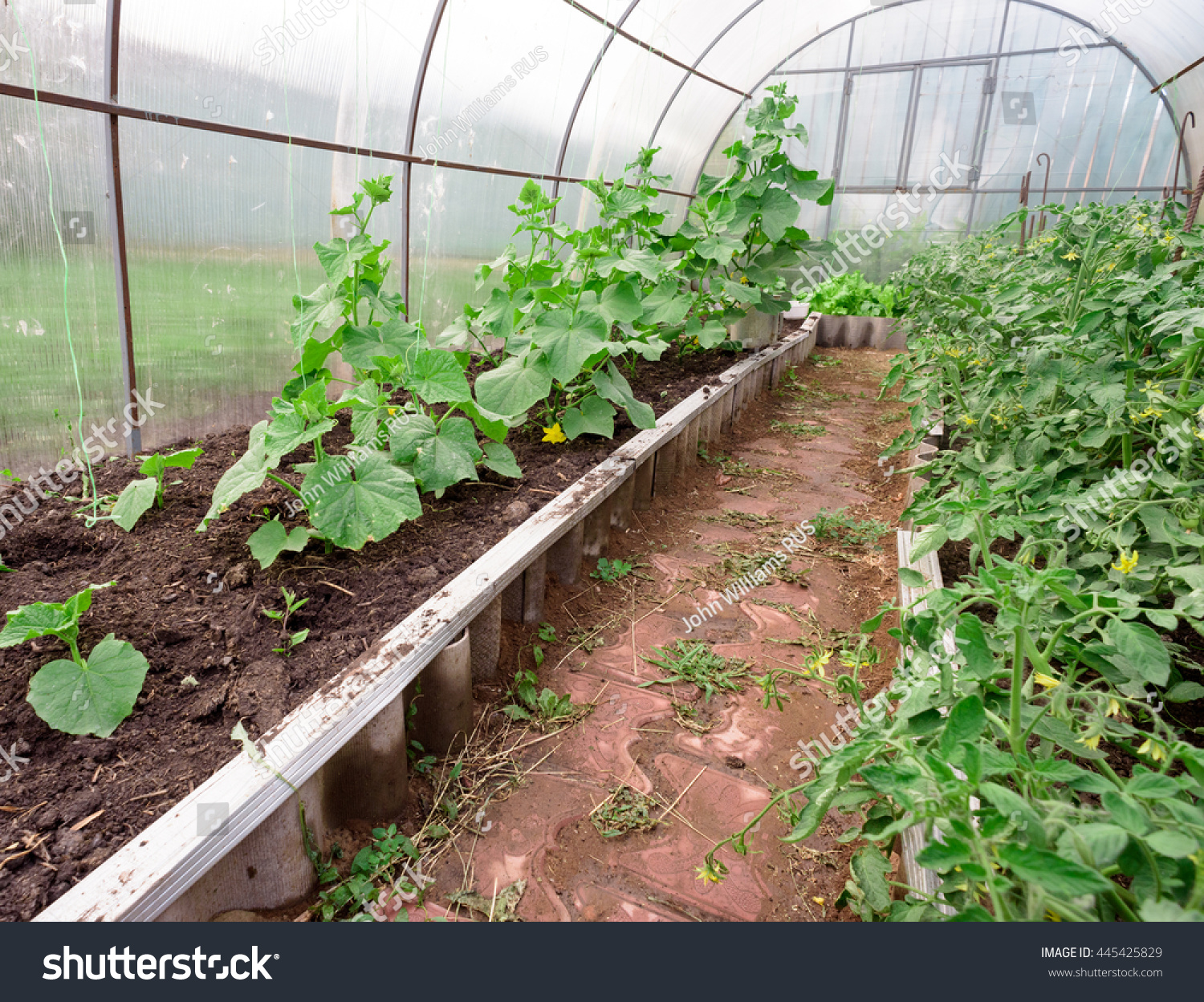 What to plant in a greenhouse Compatible and incompatible vegetables. Greenhouse for cucumbers