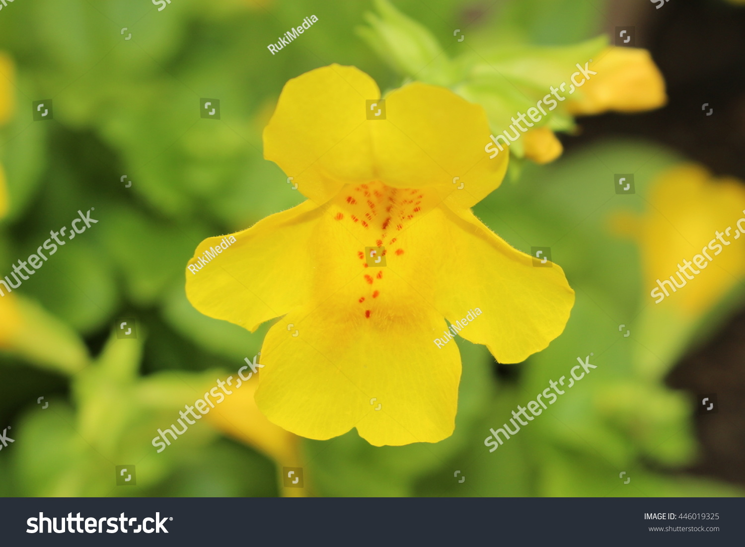 Red Spotted Yellow Monkey Flower Or Stock Photo Edit Now 446019325