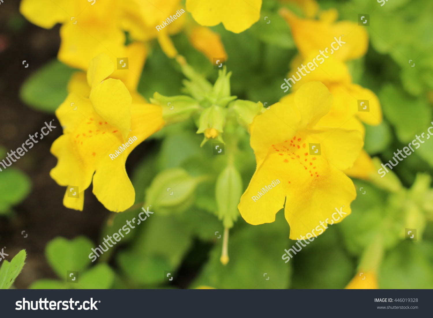 Red Spotted Yellow Monkey Flower Or Stock Photo Edit Now 446019328