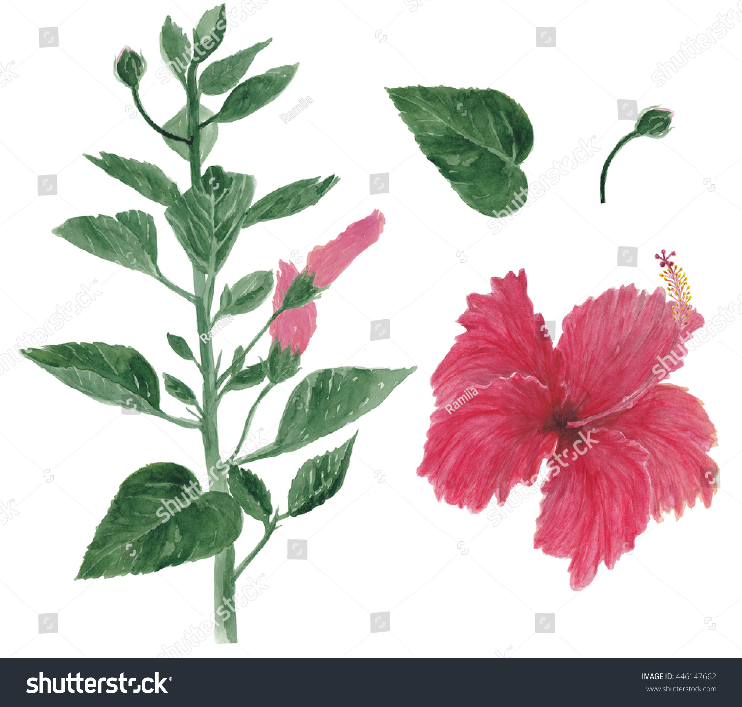 Watercolor painting red hibiscus flower branch stock illustration watercolor painting a red hibiscus flower and branch with leaves and buds isolated on white background izmirmasajfo