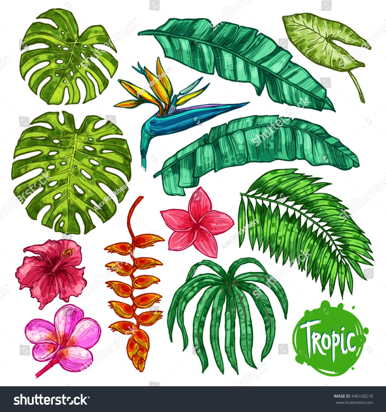 Hand Drawn Tropical Leaves And Flowers Color Set Botanical Collection In Sketch Style