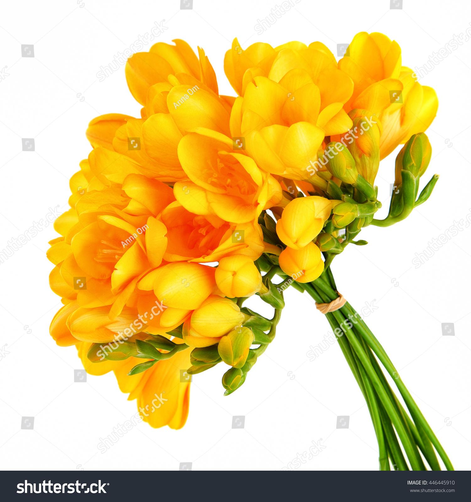 Bouquet Beautiful Yellow Freesia Flowers Isolated Stock Photo Edit