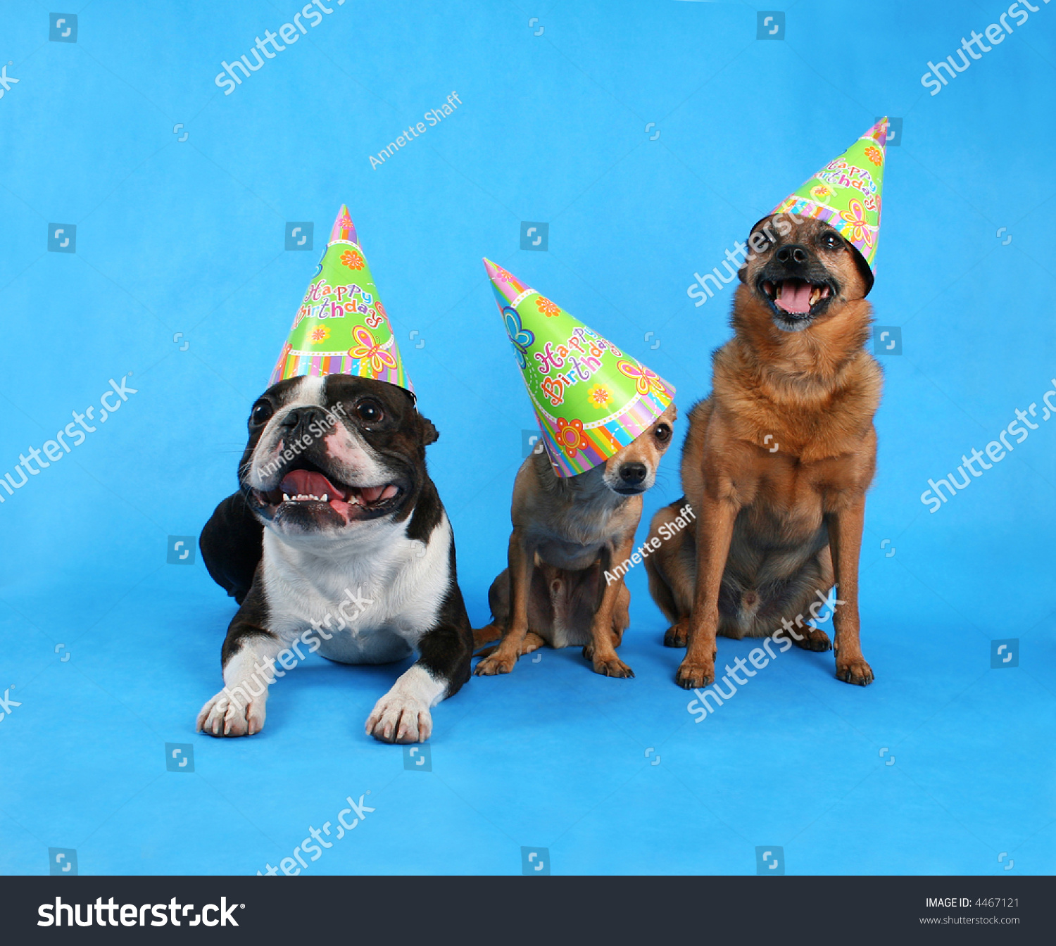 Three Dogs At A Birthday Celebration With Hats On