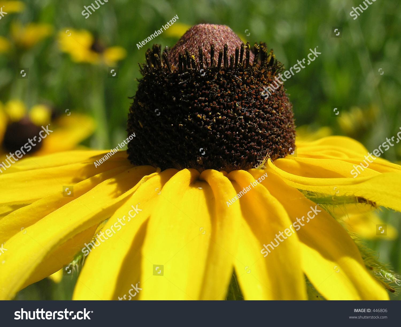 Brown Stamina Center Yellow Flower Brown Stock Photo Edit Now