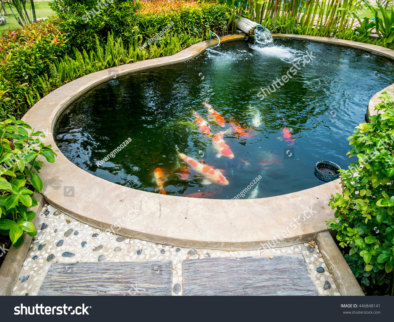 Koi fish pond garden lagerfoto 446848141 shutterstock for Koi garden sas