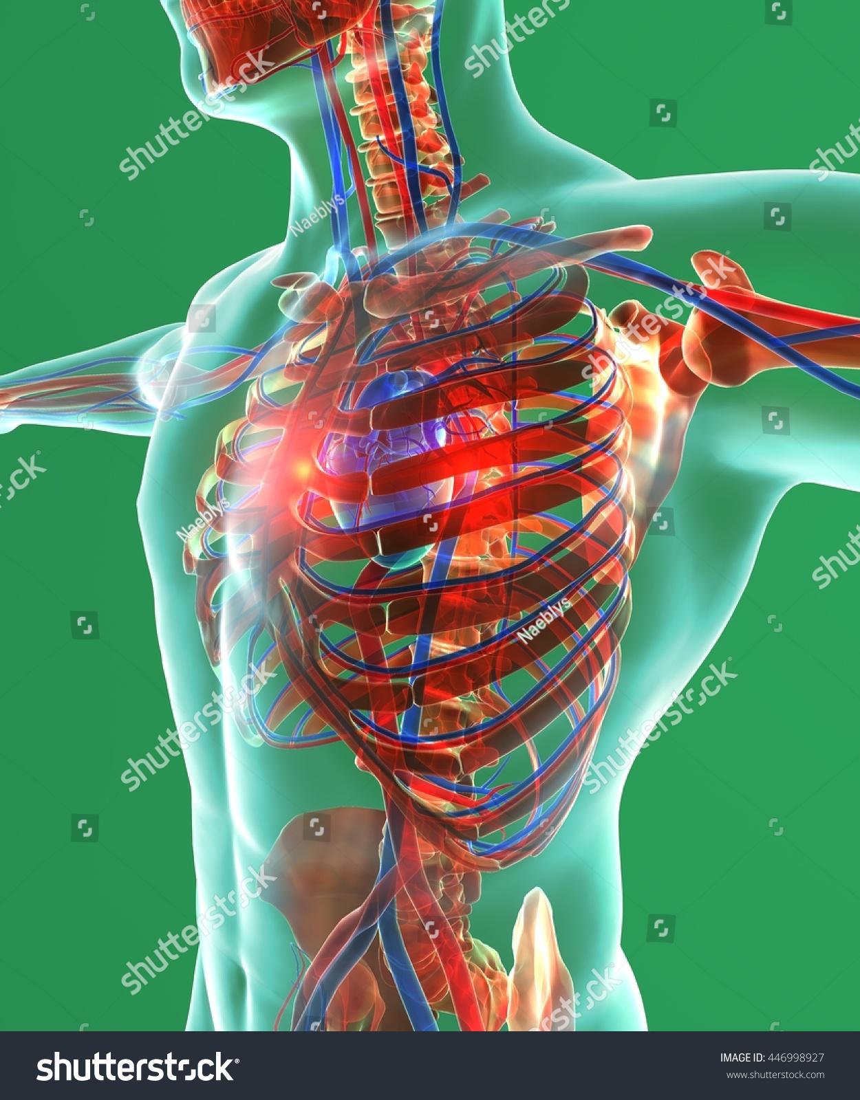 Heart Chest Surgery Human Body Circulatory Stock Illustration ...