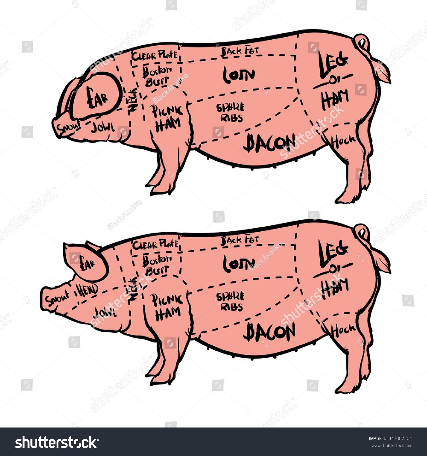 Pig Meat Diagram Simple Wiring Butcher Cut Set Hand Drawn Stock Vector Royalty Free 447007204 Hog Butchering