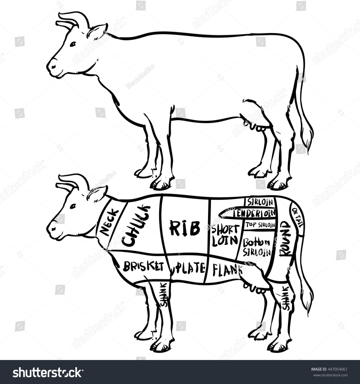 Cow cuts diagram butchery set hand stock vector 2018 447054061 cow cuts diagram and butchery set hand drawn beef isolated on white background drawing ccuart Gallery