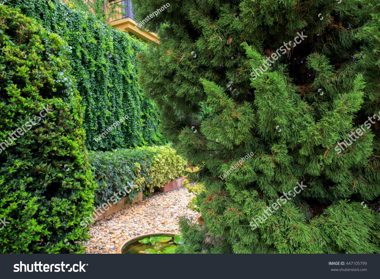 Beautiful Green Decorative Garden Trees Landscape Stock Photo ...
