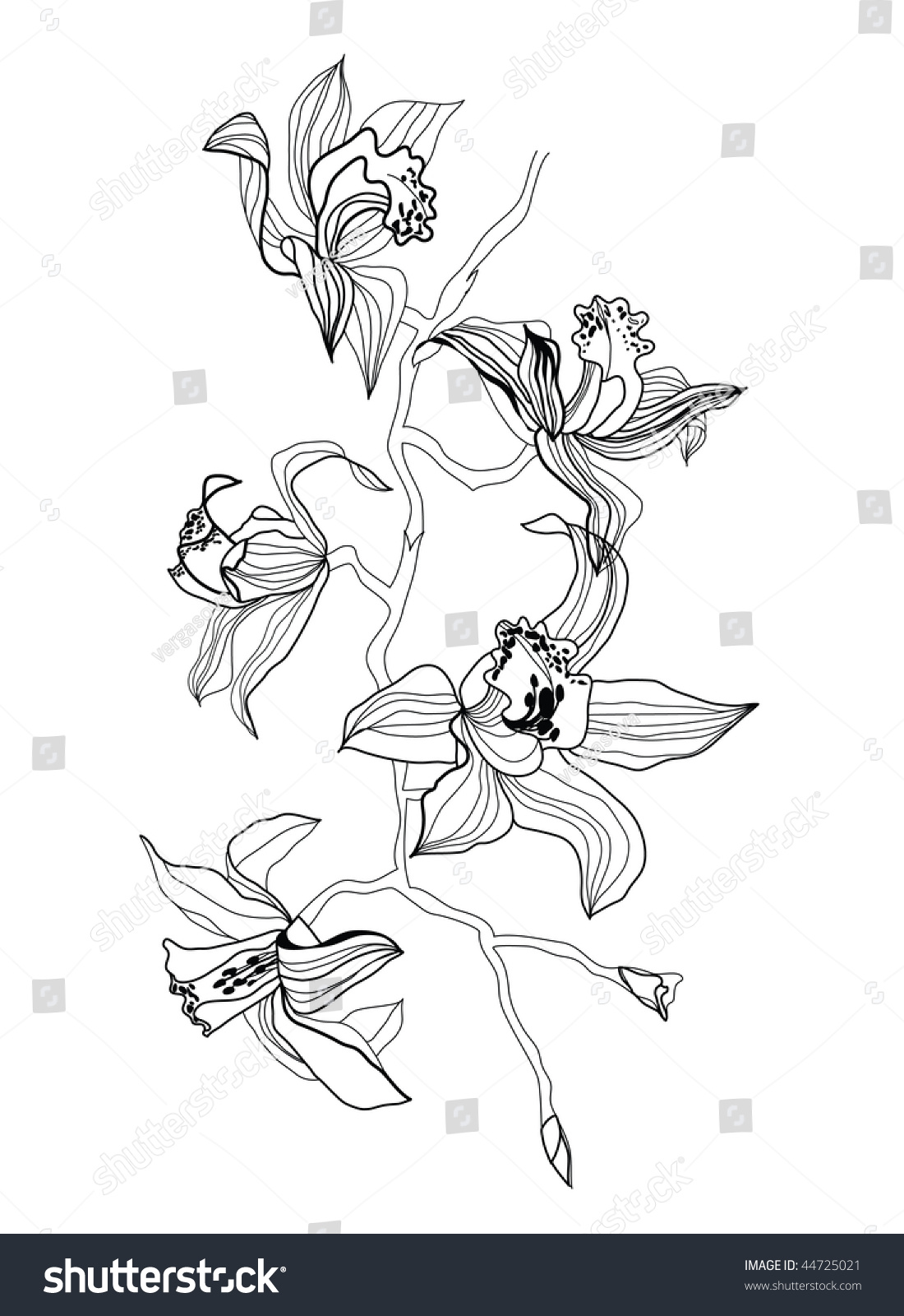 Orchid Clip Art Black And White
