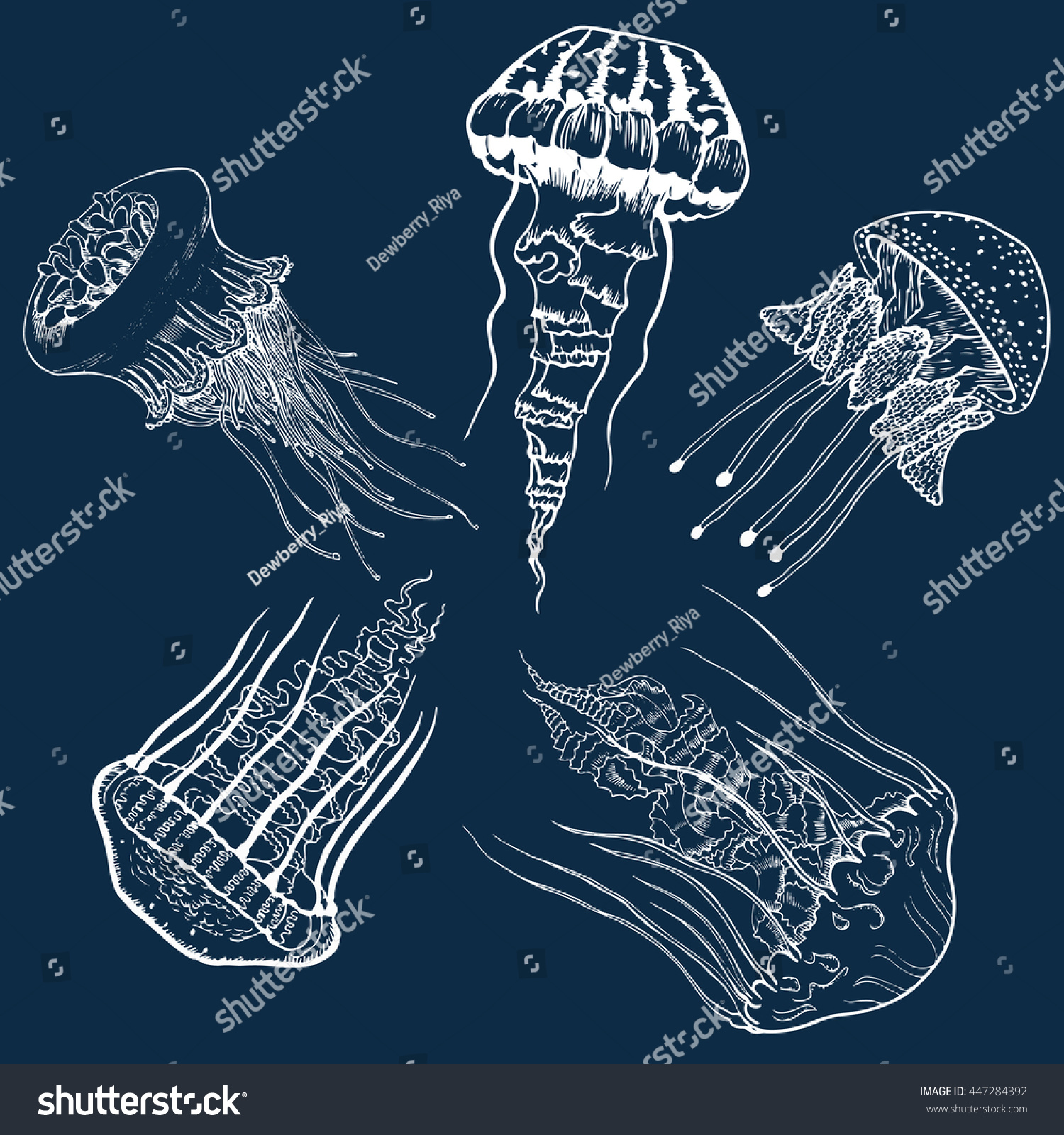 Set Hand Drawn Jellyfish Vintage Collection Stock Vector 447284392 ...